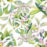 美丽的水彩夏天庭院开花的花无缝的样式 库存图片