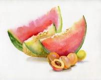 美丽的水彩西瓜 免版税库存照片