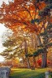 美丽的幻想的秋天秋天森林超现实的颜色环境美化与树枝,并且红色黄色在地面公园离开 库存图片