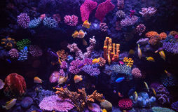美丽的水族馆 库存照片