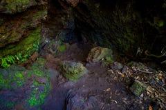 美丽的黑暗的洞在朗伊托托岛,由火山的形成做成在新西兰 库存图片