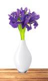 美丽的黑暗的紫色虹膜开花在白色bac隔绝的花束 库存照片