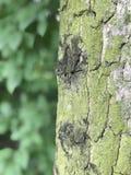 美丽的结构树在公园 图库摄影