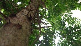 美丽的结构树 免版税库存图片