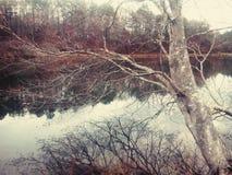 美丽的结构树 库存图片