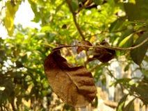 美丽的结构树 免版税库存照片