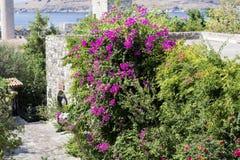 美丽的紫罗兰色九重葛回归线花 图库摄影