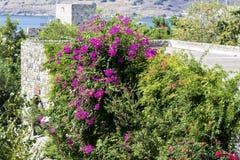 美丽的紫罗兰色九重葛回归线花 免版税库存图片