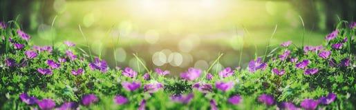 美丽的紫罗兰色吊钟花、绿色和bokeh照明设备在庭院里,夏天室外花卉自然背景 库存图片