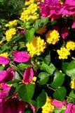 美丽的紫罗兰色和黄色花报道地面 免版税库存图片