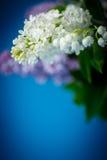 美丽的紫色丁香花束  库存图片