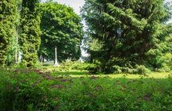 美丽的绿色公园 库存照片