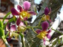 美丽的紫色和黄色兰花 免版税库存图片