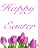 美丽的紫色春天郁金香边界  免版税库存图片