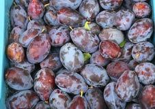 美丽的紫色李子,农夫的市场 库存图片