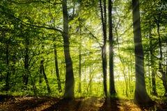 美丽的绿色森林与光束的春天 库存照片