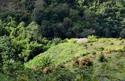 美丽的绿色森林和房子 免版税图库摄影