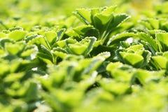 美丽的绿色植物 免版税库存照片
