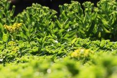 美丽的绿色植物 库存照片