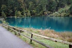 美丽的绿色湖看法有杉木森林的在秋天, Switzer 免版税库存图片