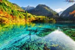 美丽的黄色秋天森林在五Flower湖反射了 免版税库存照片