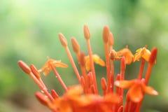 美丽的黄色红色花 免版税图库摄影