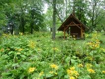 美丽的黄色花包围的老公墓的木教堂 库存图片