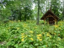 美丽的黄色花包围的老公墓的木教堂 图库摄影