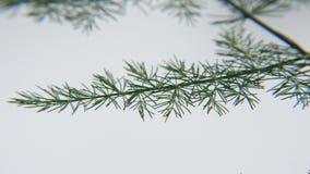 美丽的绿色花叶子 免版税库存照片