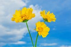 美丽的黄色花 库存图片