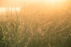 美丽的绿色薹草的领域在早晨光的 在北欧的沼泽风景 免版税库存照片