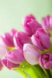 美丽的紫色郁金香花 免版税库存图片