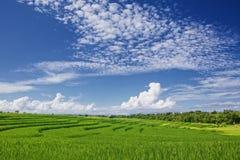 美丽的绿色稻大阳台在与clowds的明亮的蓝天下 免版税图库摄影