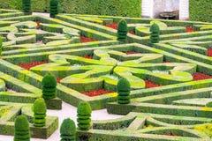美丽的绿色黄杨木潜叶虫庭院被修剪入形状 免版税库存照片