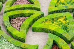 美丽的绿色黄杨木潜叶虫庭院被修剪入形状 库存照片