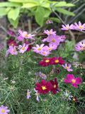 美丽的紫色&红色花 免版税图库摄影