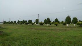 美丽的绿草庭院 库存图片