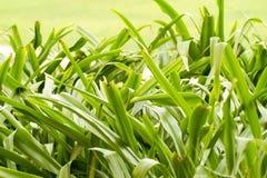 美丽的绿草植物 免版税图库摄影