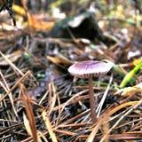 美丽的年轻蘑菇在森林沼地 库存照片