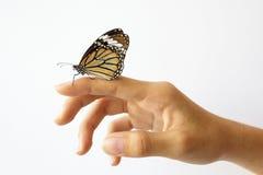 美丽的蝴蝶坐女孩手。 库存图片