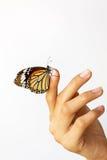 美丽的蝴蝶坐女孩手。 免版税库存照片