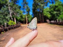 美丽的蝴蝶坐女孩手指 免版税库存照片