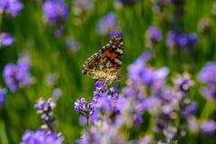 美丽的蝴蝶坐花 免版税库存照片