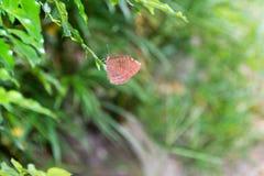 美丽的蝴蝶宏指令射击 免版税图库摄影