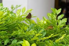 美丽的蝴蝶宏指令射击 库存图片
