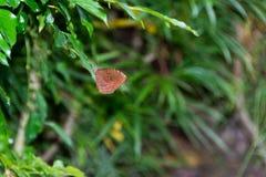 美丽的蝴蝶宏指令射击 免版税库存照片