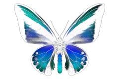 美丽的蝴蝶的黑白图象与五颜六色的翼的 免版税库存图片