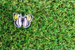 美丽的蝴蝶 图库摄影