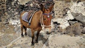 美丽的驴 免版税库存照片