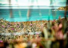 美丽的Califonia海岸风景射击 免版税库存照片